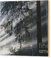 Stout Grove Redwoods With Sunrays Breaking Through Fog Wood Print