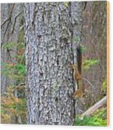 Straight Tail Squirrel Wood Print