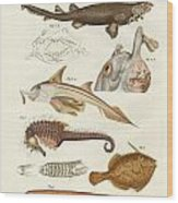 Strange Cartilageous Fish Wood Print