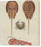Strange Crabs Wood Print