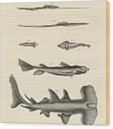 Strange Fish Wood Print