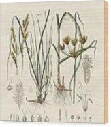 Strange Grasses Wood Print