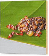 Strange Moth Wood Print