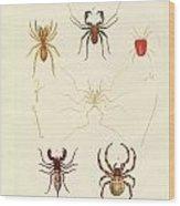 Strange Spiders Wood Print