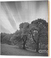Strange Trees On Meadow Wood Print