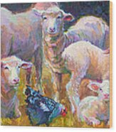 Stranger At The Well - Spring Lambs Sheep And Hen Wood Print