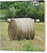 Straw To Collect Wood Print