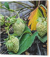 Strawberries - Soon To Be Picked Wood Print