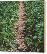 Strawberry Farm Field Wood Print