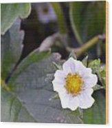 Strawberry Flower Wood Print