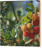 Strawberry Tree Wood Print