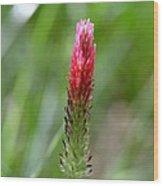 Strawberry Wildflower Wood Print