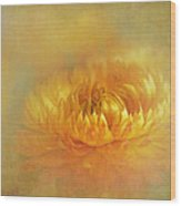 Strawflower IIi With Textures Wood Print
