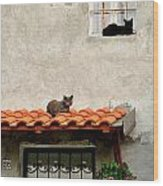 Stray Cats Art Composition Wood Print