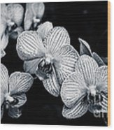 Stream Of Orchids Wood Print