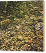 Stream Water Wood Print