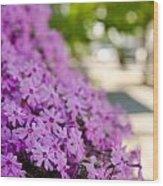 Street Wildflower Wood Print