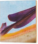 Strelitzia Abstract Wood Print