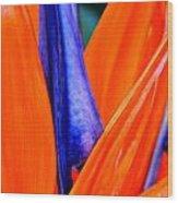 Strelitzia Colour Wood Print