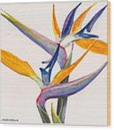 Strelitzia Flowers Wood Print