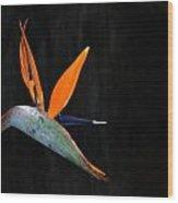 Strelitzia Reginae Wood Print