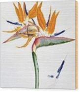 Strelitzia Reginae Flowers Wood Print