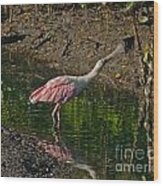 Stretched Out Pink Spoonbill Wood Print