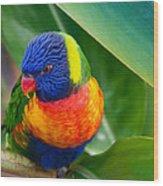 Striking Rainbow Lorakeet Wood Print by Penny Lisowski