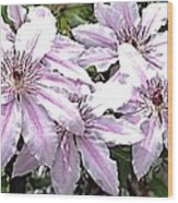 Striped Clematis Wood Print