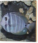 Striped Fish Wood Print