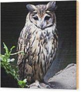 Striped Owl Wood Print