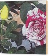 Striped Rose And Yellow Wood Print