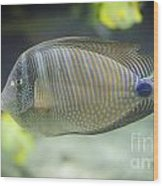 Striped Tropical Fish Desjardini Tang Wood Print