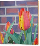 Striped Tulips Wood Print