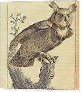 Strix Virginiana Owl Wood Print
