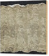 Stromatolite Wood Print by Science Photo Library