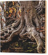 Strong Roots Wood Print by Louis Dallara