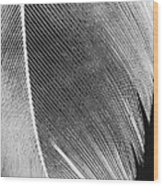 Structure Of Quill Wood Print