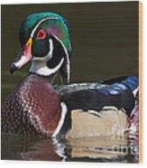 Strutting His Stuff - Wood Duck Wood Print