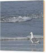 Strutting Seagull Wood Print