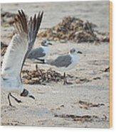 Strutting Seagull On The Beach Wood Print