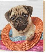 Stuck Pug Wood Print by Greg Cuddiford