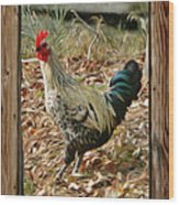 Studio Window Rooster Wood Print