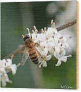 Study Of A Bee Wood Print