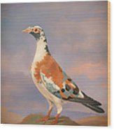 Study Of A Carrier Pigeon Wood Print