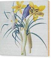 Study Of Four Species Of Crocus Wood Print