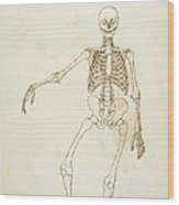 Study Of The Human Figure, Anterior View, From A Comparative Anatomical Exposition Of The Structure Wood Print