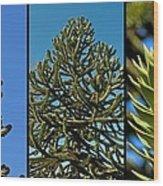 Study Of The Monkey Puzzle Tree Wood Print