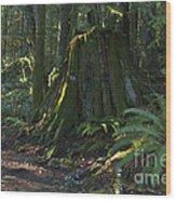 Stump And Fern Wood Print