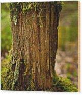 Stump Wood Print by Shane Holsclaw